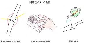 関節包の役割