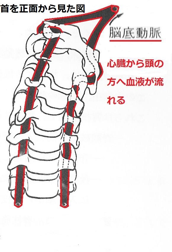 2頸椎動脈