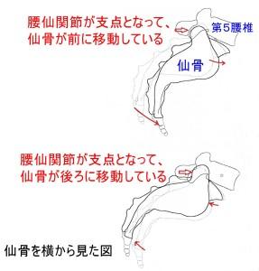 腰仙関節の動き